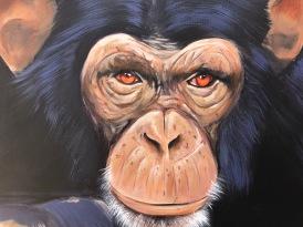 Baranes-Scimpanzé